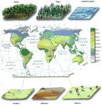 20100208184532-biomas2.jpg