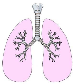 20110228175243-respiratorio2.jpg